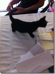 p-2014-Kitten Charles zzbb