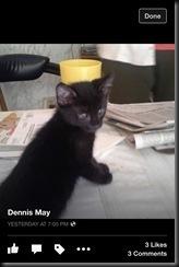 p-2014-May Kitten Charles a